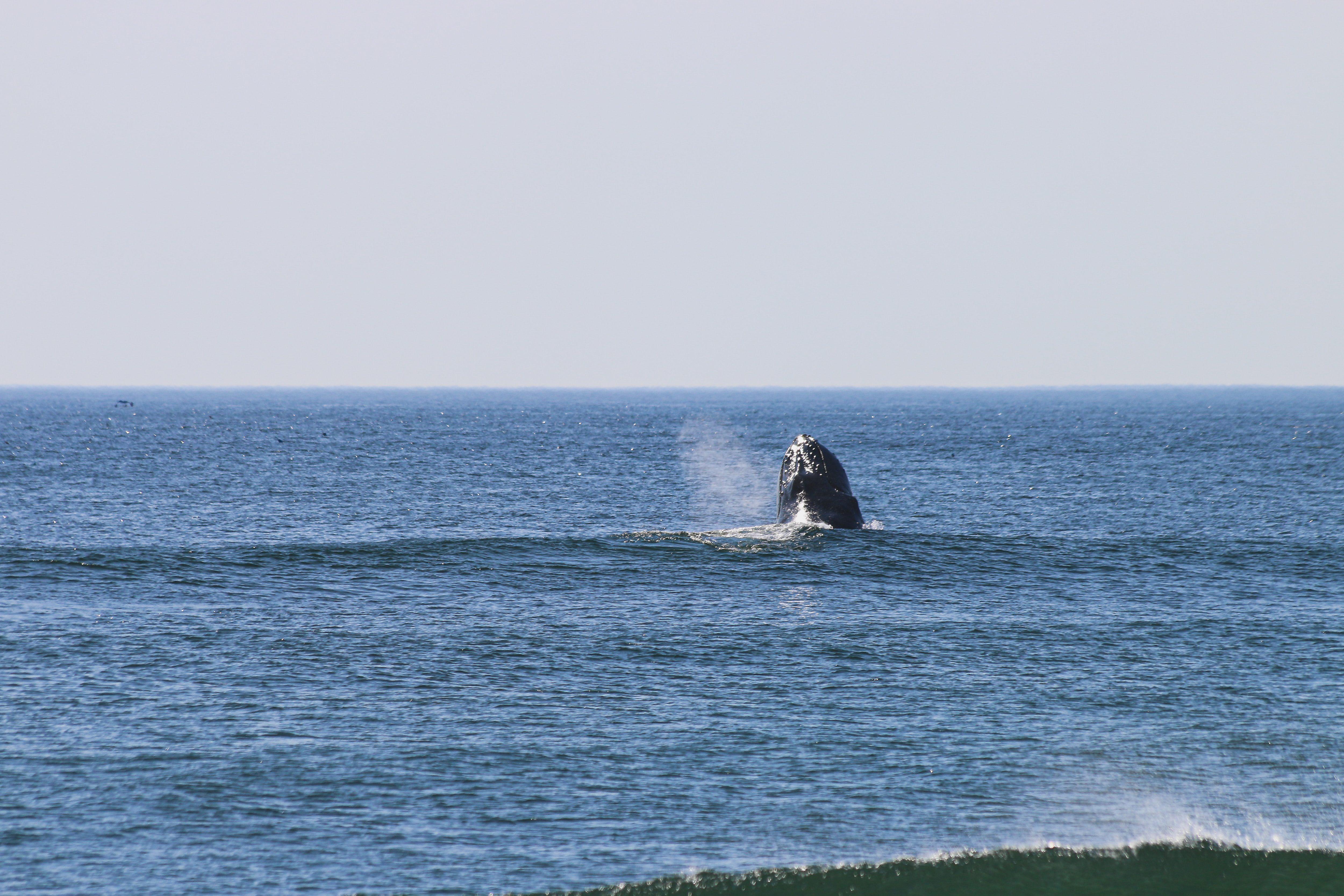 whales great ocean road