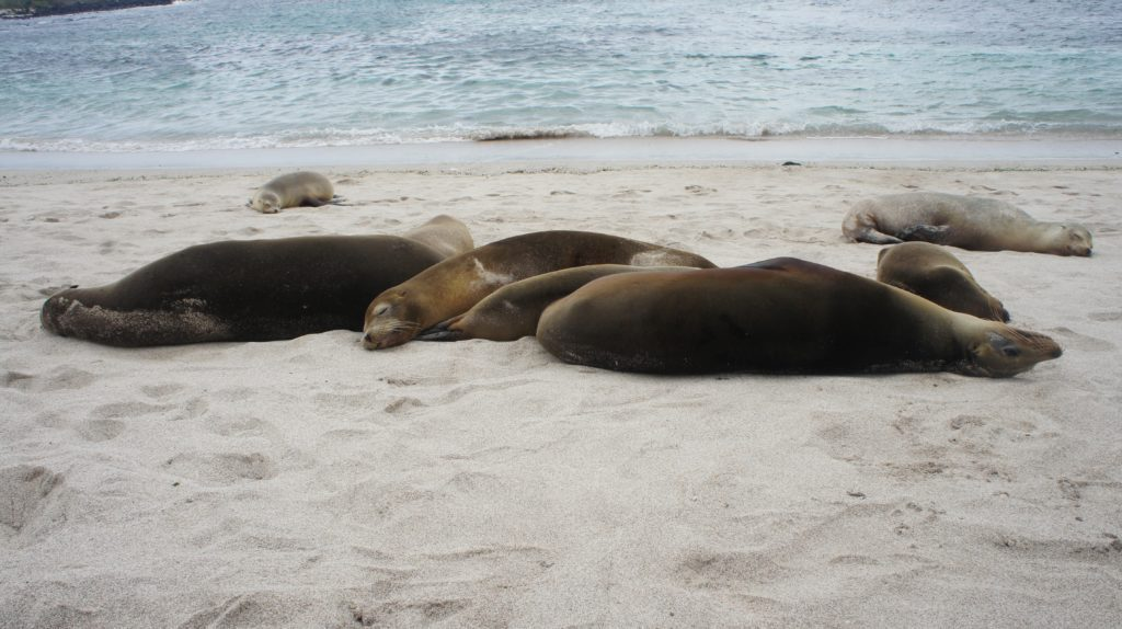 things to do in Warrnambool include seeing Seals