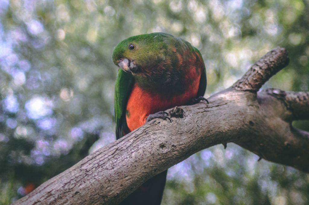 warrnambool botanical garden bird