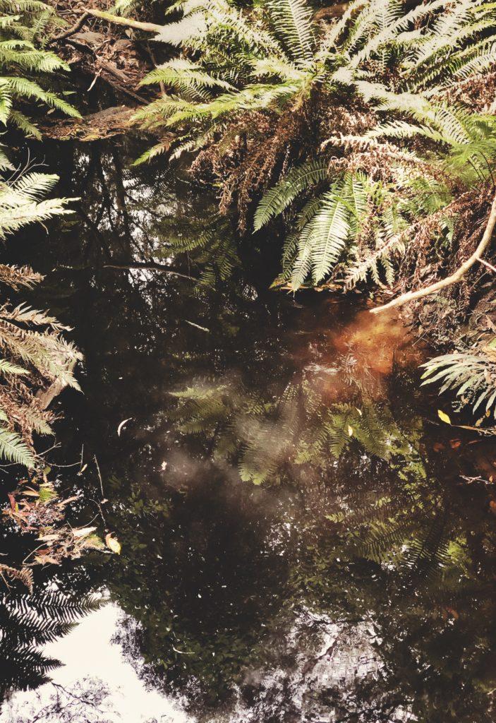 trail lorne