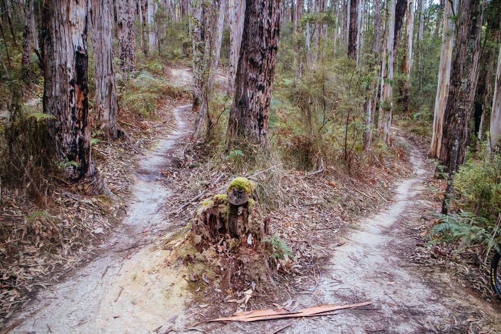 aireys inlet mountain biking