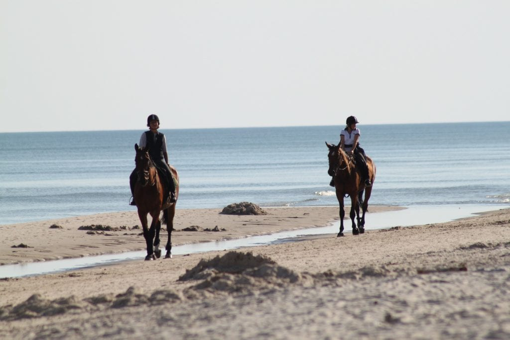 horseback riding on the aireys inlet beach