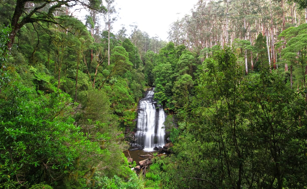 Little Aire Falls in the Great Otway National Park, Victoria, Australia.
