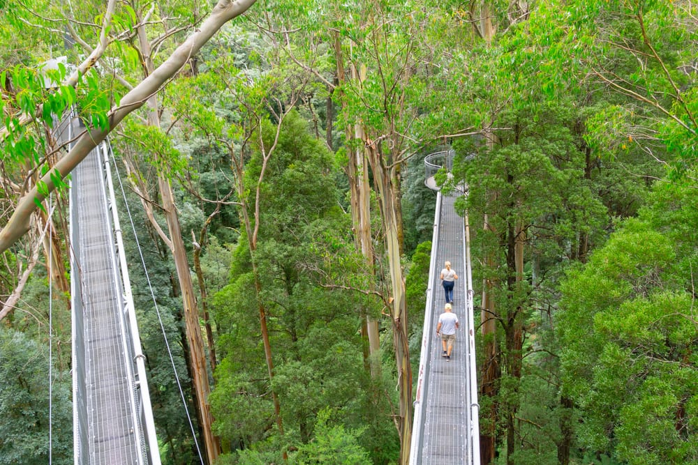 Tourists on Otway Treetop Walk
