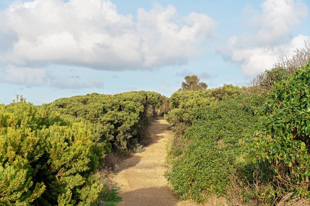 surf coast walk trail