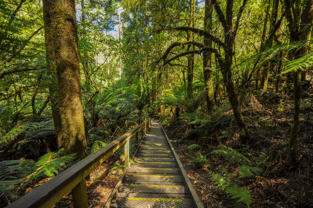 Ultimate Guide to the Great Otway National Park